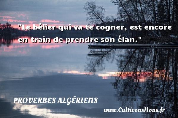 Proverbes Algériens - Le bélier qui va te cogner, est encore en train de prendre son élan. Un Proverbe Algérien PROVERBES ALGÉRIENS