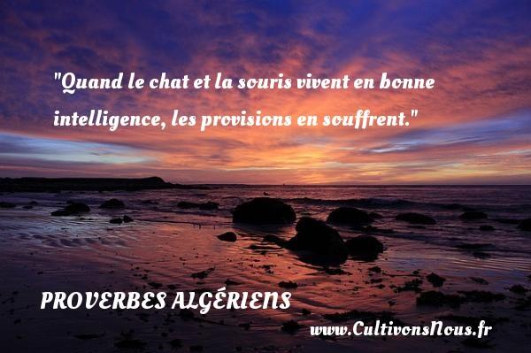 Proverbes Algériens - Quand le chat et la souris vivent en bonne intelligence, les provisions en souffrent. Un Proverbe Algérien PROVERBES ALGÉRIENS