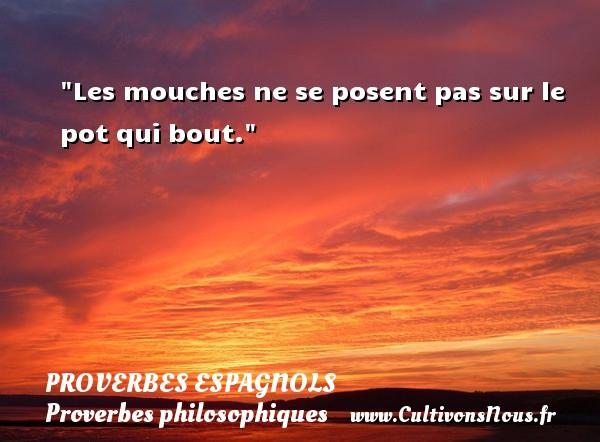 Proverbes espagnols - Proverbes philosophiques - Les mouches ne se posent pas sur le pot qui bout. Un Proverbe espagnol PROVERBES ESPAGNOLS