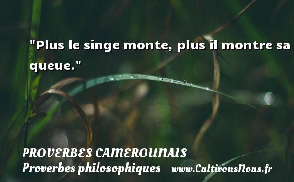 Proverbes camerounais - Proverbes philosophiques - Plus le singe monte, plus il montre sa queue. Un Proverbe camerounais PROVERBES CAMEROUNAIS