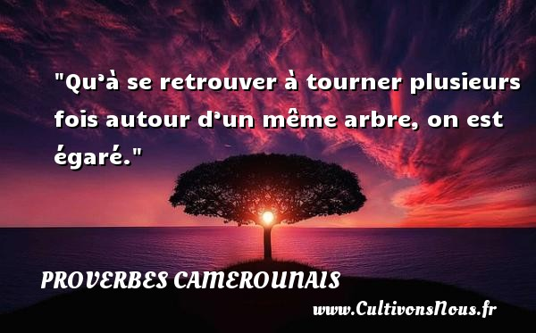 Qu'à se retrouver à tourner plusieurs fois autour d'un même arbre, on est égaré. Un Proverbe camerounais PROVERBES CAMEROUNAIS - Proverbes philosophiques