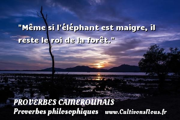 Proverbes camerounais - Proverbes philosophiques - Même si l éléphant est maigre, il reste le roi de la forêt. Un Proverbe camerounais PROVERBES CAMEROUNAIS