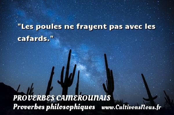 Proverbes camerounais - Proverbes philosophiques - Les poules ne frayent pas avec les cafards. Un Proverbe camerounais PROVERBES CAMEROUNAIS