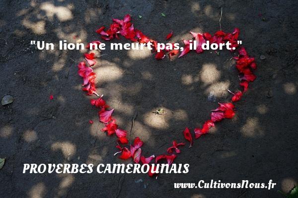 Un lion ne meurt pas, il dort. Un Proverbe camerounais PROVERBES CAMEROUNAIS