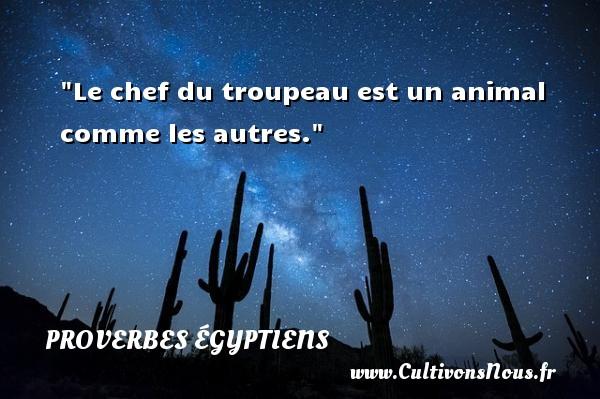 Le chef du troupeau est un animal comme les autres. Un Proverbe egyptien PROVERBES ÉGYPTIENS - Proverbes égyptiens - Proverbes philosophiques