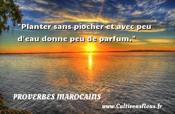 Proverbes marocains - Proverbes philosophiques - Planter sans piocher et avec peu d eau donne peu de parfum. Un Proverbe marocain PROVERBES MAROCAINS