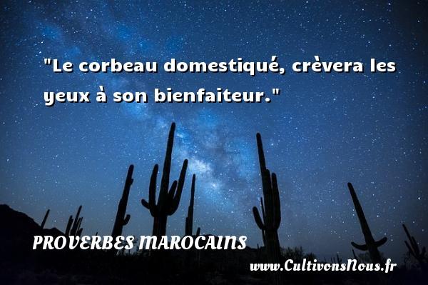 Le corbeau domestiqué, crèvera les yeux à son bienfaiteur. Un Proverbe marocain PROVERBES MAROCAINS - Proverbes philosophiques