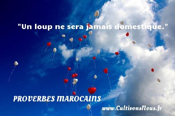 Un loup ne sera jamais domestique. Un Proverbe marocain PROVERBES MAROCAINS - Proverbes philosophiques