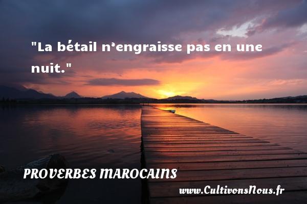 La bétail n'engraisse pas en une nuit. Un Proverbe marocain PROVERBES MAROCAINS