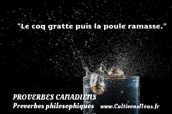 Le coq gratte puis la poule ramasse. Un Proverbe canadien PROVERBES CANADIENS - Proverbes philosophiques