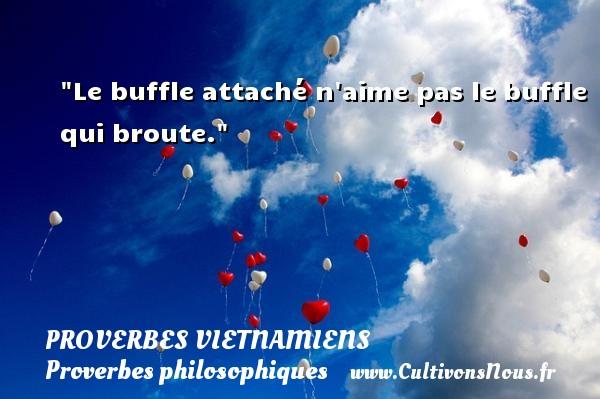 Proverbes vietnamiens - Proverbes philosophiques - Le buffle attaché n aime pas le buffle qui broute. Un Proverbe vietnamien PROVERBES VIETNAMIENS