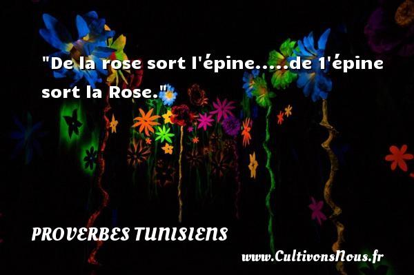 De la rose sort l épine.....de 1 épine sort la Rose. Un Proverbe tunisien PROVERBES TUNISIENS - Proverbe rose