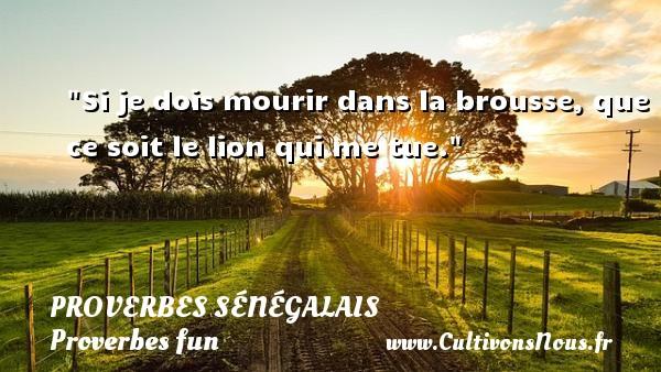 Si je dois mourir dans la brousse, que ce soit le lion qui me tue. Un Proverbe sénégalais PROVERBES SÉNÉGALAIS - Proverbes sénégalais - Proverbes fun - Proverbes philosophiques