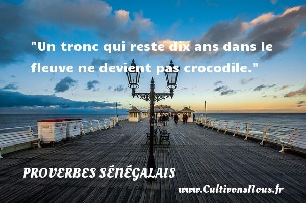 Un tronc qui reste dix ans dans le fleuve ne devient pas crocodile. Un Proverbe sénégalais PROVERBES SÉNÉGALAIS - Proverbes sénégalais