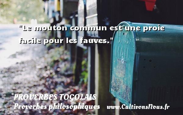 Proverbes togolais - Proverbes philosophiques - Le mouton commun est une proie facile pour les fauves. Un Proverbe togolais PROVERBES TOGOLAIS