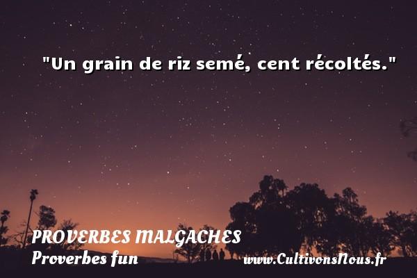 Un grain de riz semé, cent récoltés. Un Proverbe malgache PROVERBES MALGACHES - Proverbes fun - Proverbes philosophiques
