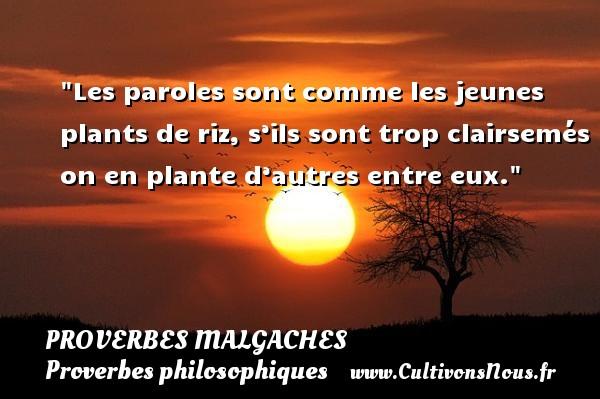 Proverbes malgaches - Proverbes philosophiques - Les paroles sont comme les jeunes plants de riz, s'ils sont trop clairsemés on en plante d'autres entre eux. Un Proverbe malgache PROVERBES MALGACHES