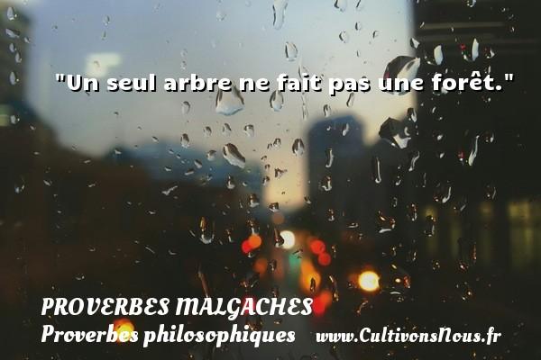 Proverbes malgaches - Proverbes philosophiques - Un seul arbre ne fait pas une forêt. Un Proverbe malgache PROVERBES MALGACHES