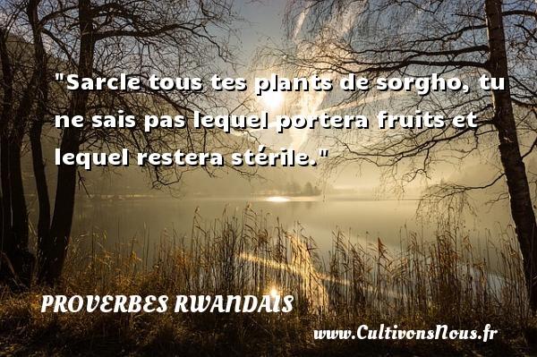 Sarcle tous tes plants de sorgho, tu ne sais pas lequel portera fruits et lequel restera stérile. Un Proverbe rwandais PROVERBES RWANDAIS