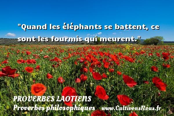 Quand les éléphants se battent, ce sont les fourmis qui meurent. Un Proverbe laotien PROVERBES LAOTIENS - Proverbes philosophiques