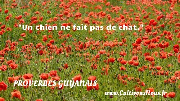 Un chien ne fait pas de chat. Un Proverbe guyanais PROVERBES GUYANAIS - Proverbes philosophiques