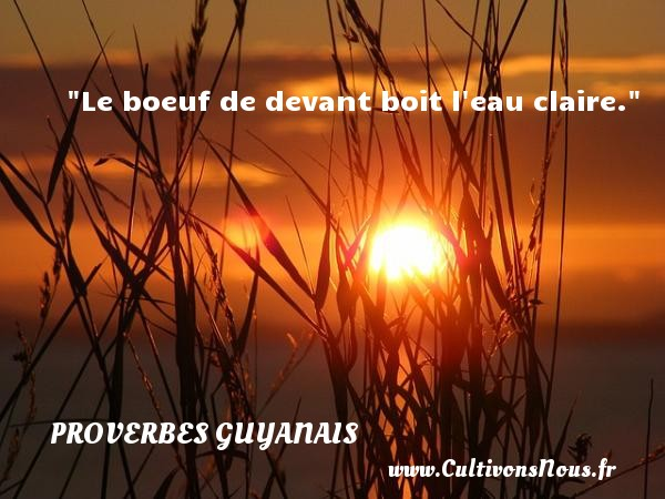 Le boeuf de devant boit l eau claire. Un Proverbe guyanais PROVERBES GUYANAIS - Proverbes philosophiques