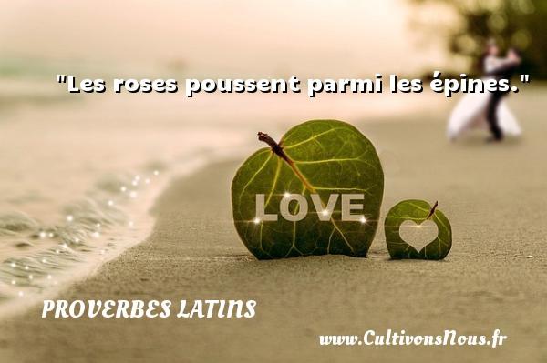 Proverbes latins - Proverbe rose - Les roses poussent parmi les épines. Un Proverbe latin PROVERBES LATINS
