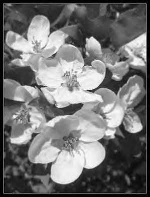 poésie-des-fleurs