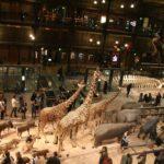 Le Musée national d'histoire naturelle : un site à découvrir à Paris